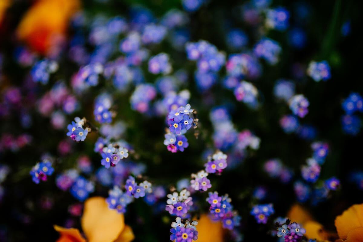 Colors in Your Garden