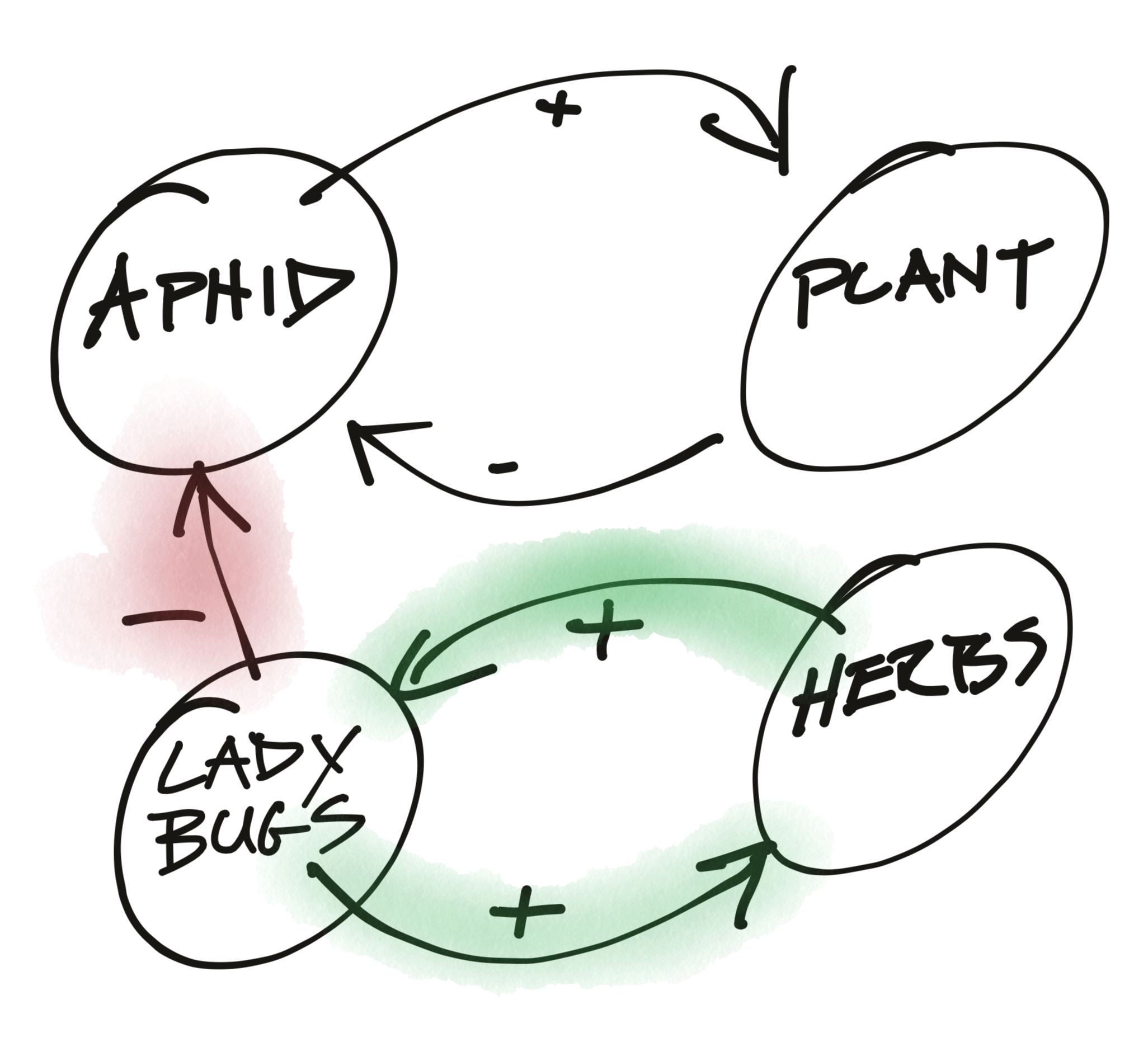 Attract Ladybugs Systems Model