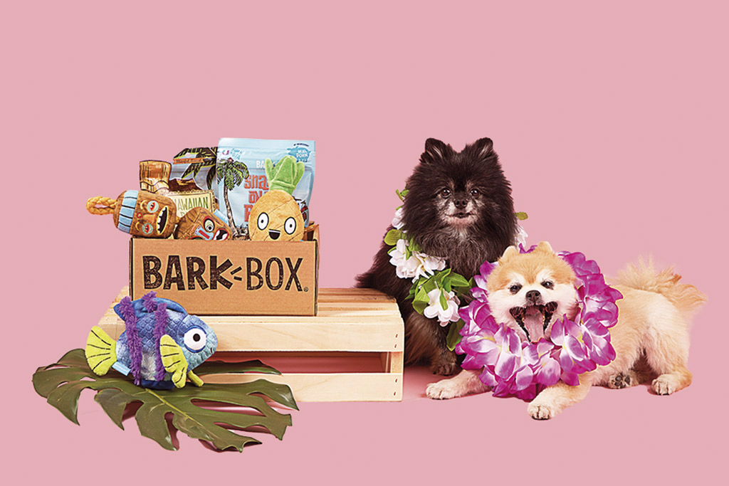 bark-box-dog-treats-and-toys
