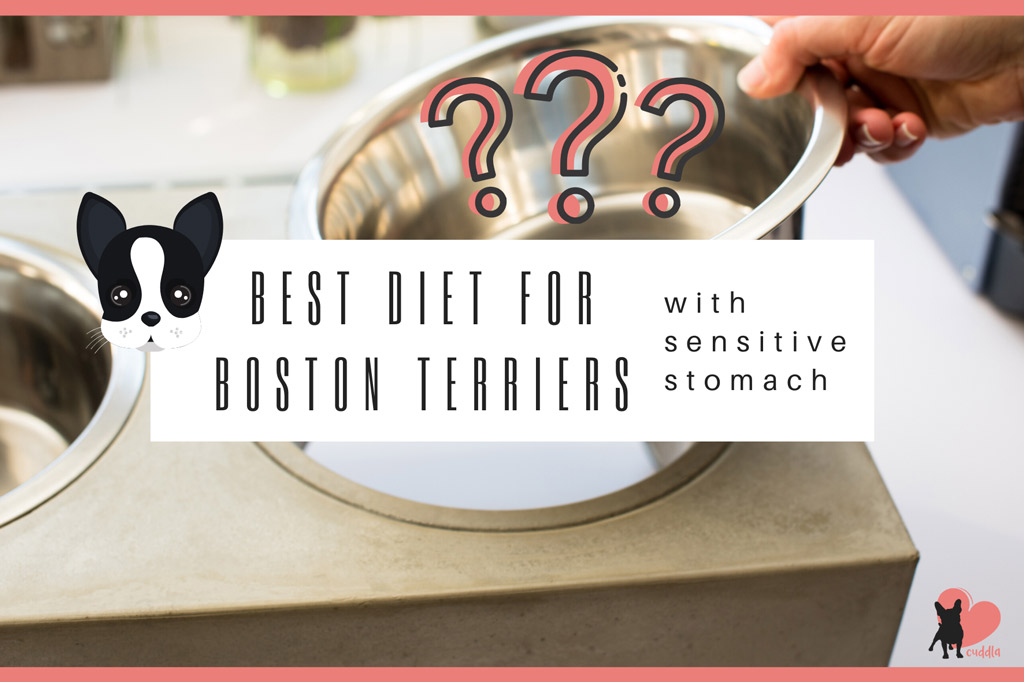 best-diet-for-boston-terriers-with-sensitive-stomach
