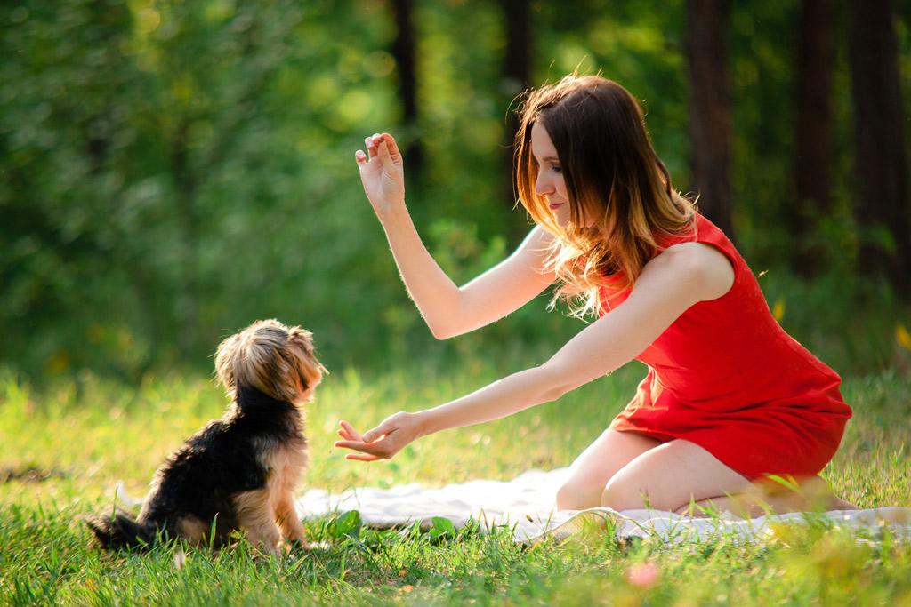 best-dog-training