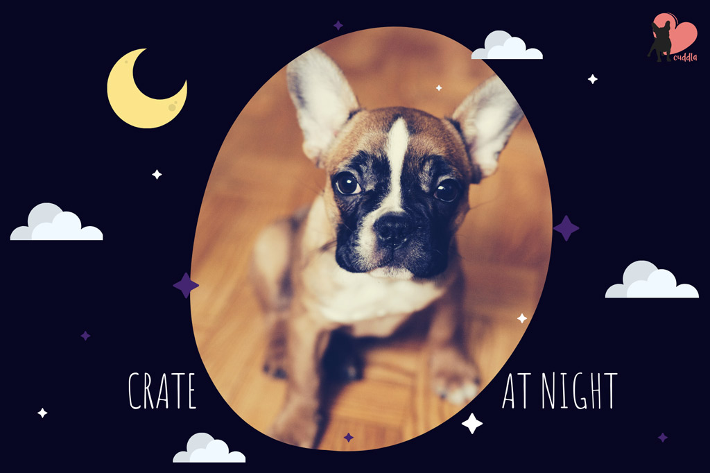 boston-terrier-crate-training-at-night