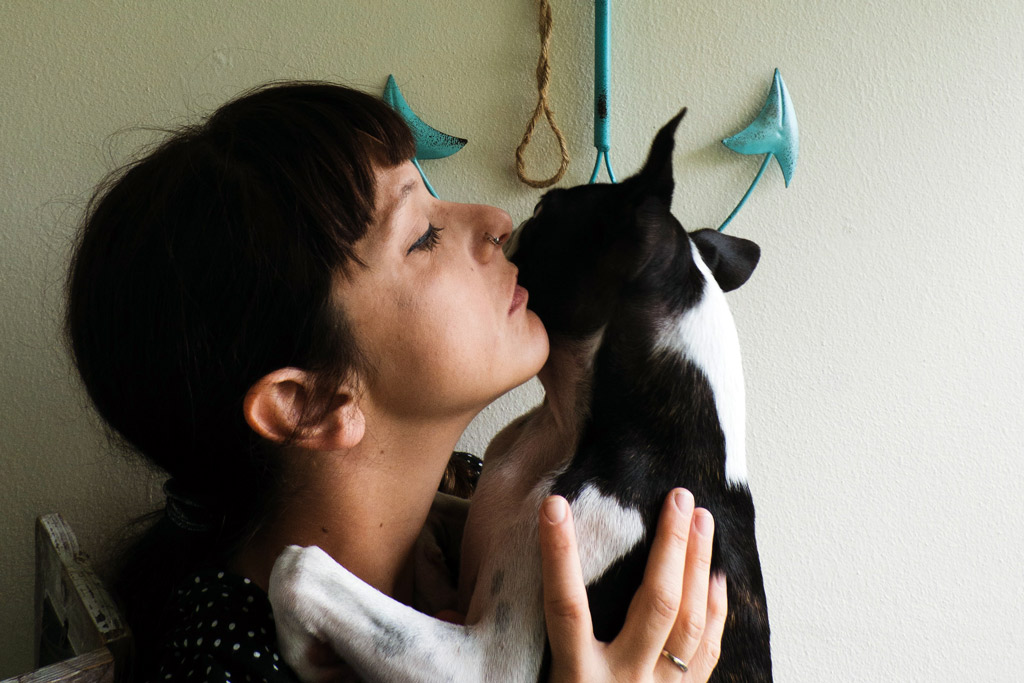 boston-terrier-cuddling