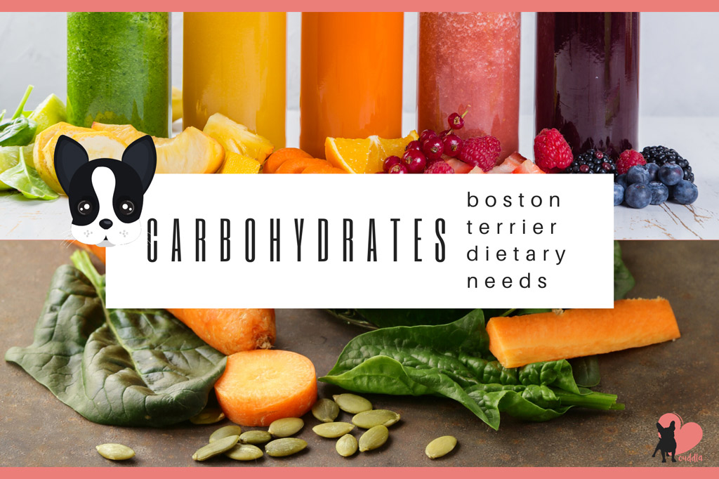 boston-terrier-diet-carbohydrates