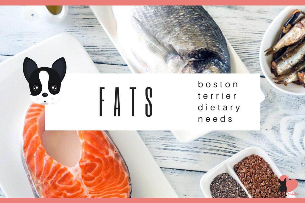 boston-terrier-diet-fats