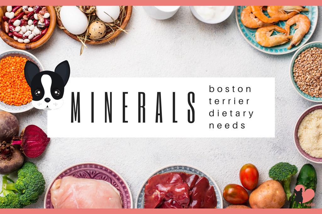 boston-terrier-diet-minerals