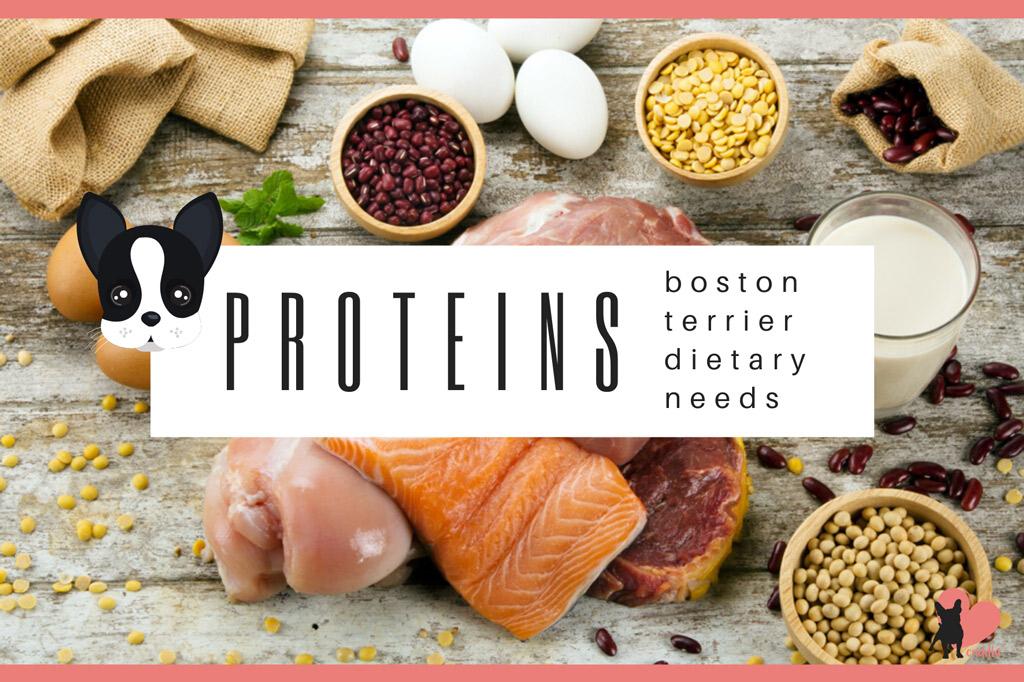 boston-terrier-diet-proteins
