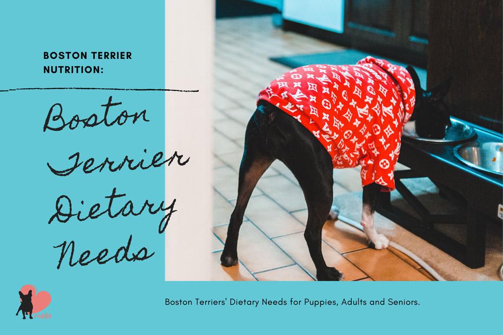 boston-terrier-dietary-needs