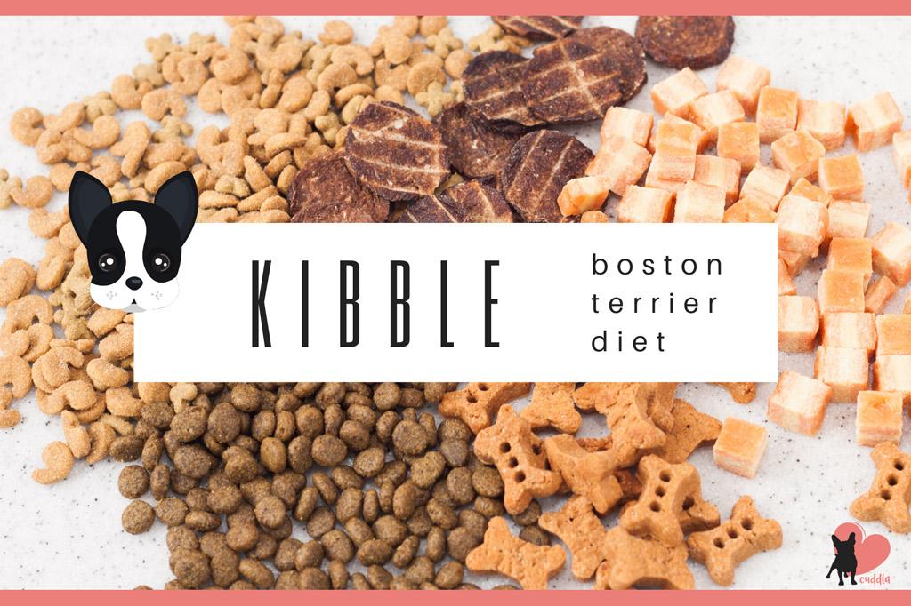 boston-terrier-dry-diet-kibble