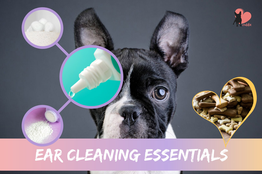 boston-terrier-ear-cleaning-essentials