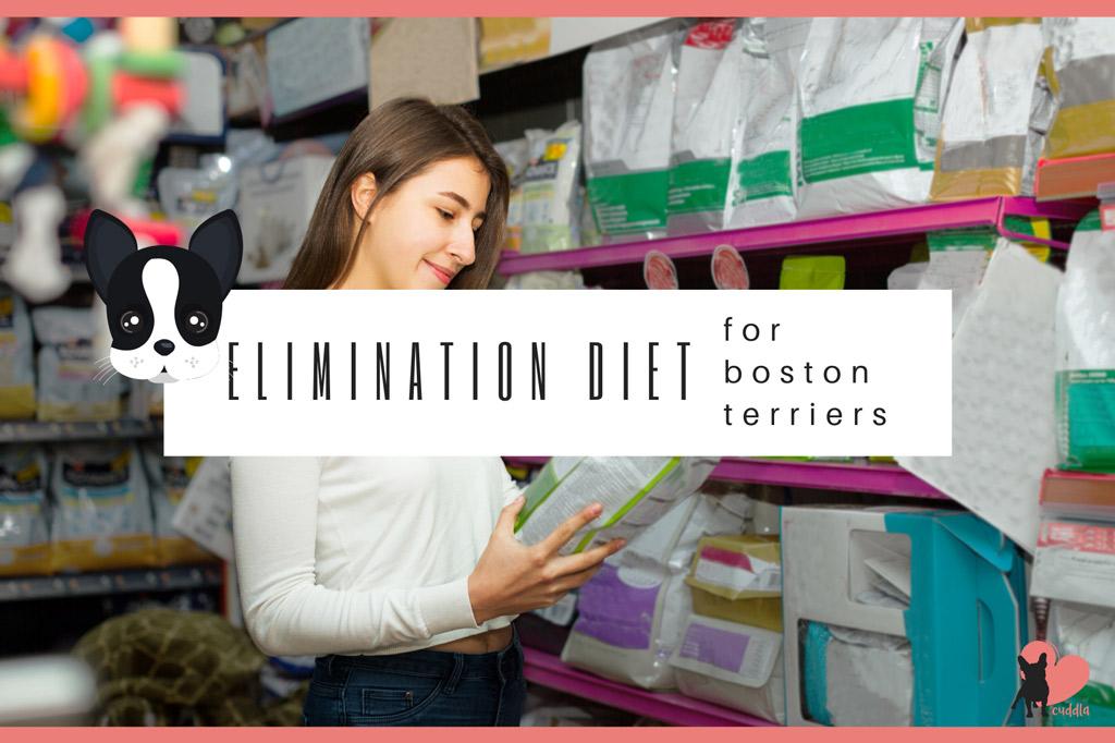 boston-terrier-elimination-diet