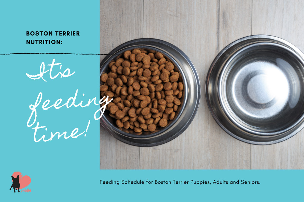 boston-terrier-feeding-schedule
