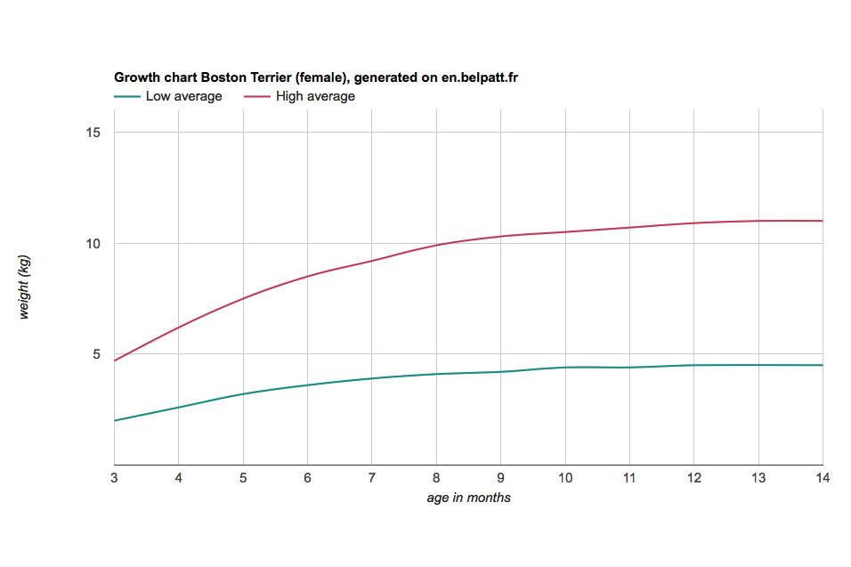 boston-terrier-growth-chart-female