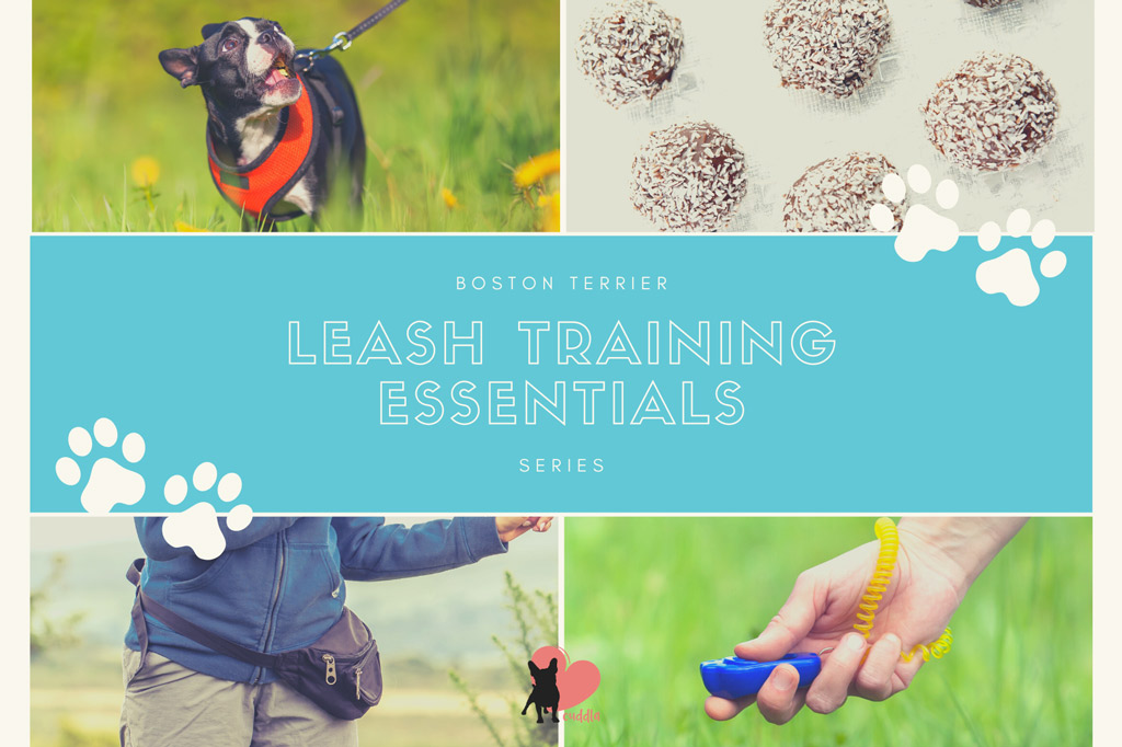 boston-terrier-leash-training-essentials