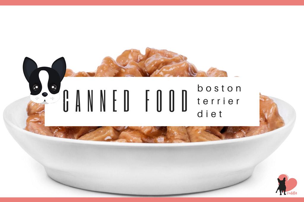 boston-terrier-moist-diet-canned-food