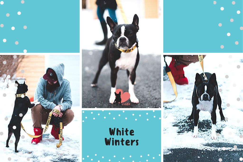 boston-terrier-paw-protection