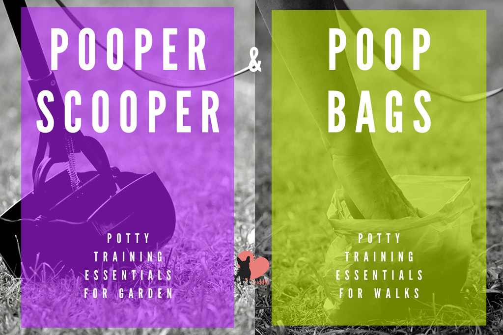 boston-terrier-potty-training-essentials