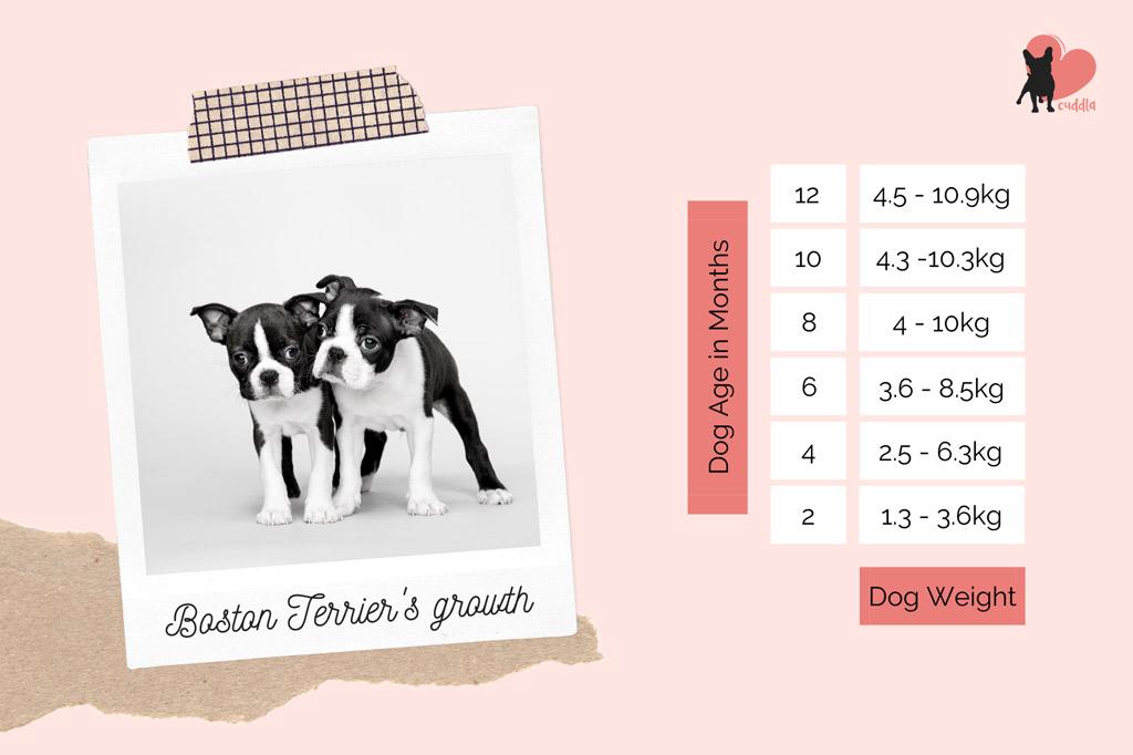 boston-terrier-puppy-weight-chart
