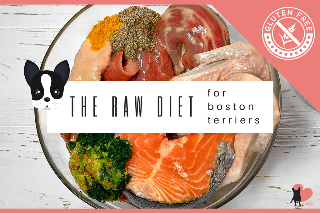boston-terrier-raw-diet