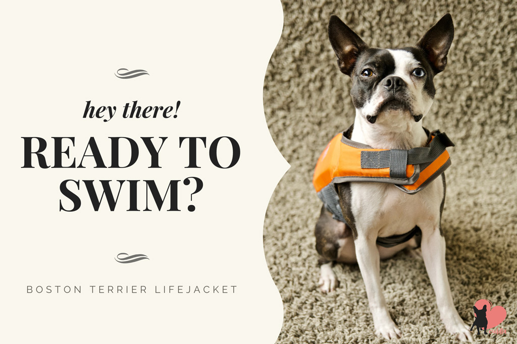 boston-terrier-swimming-safety