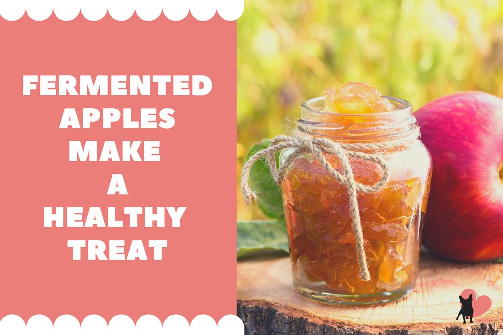 boston-terrier-treats-fermented-apples