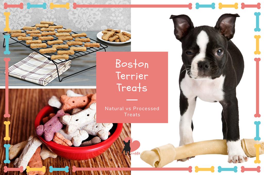 boston-terrier-treats-natural-vs-processed