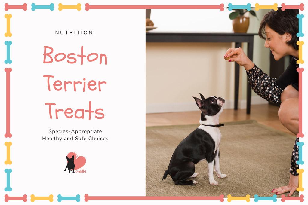 boston-terriers-treats