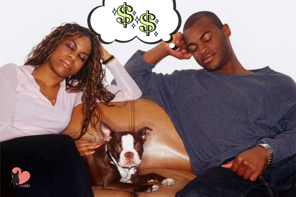 cost-of-owning-a-boston-terrier