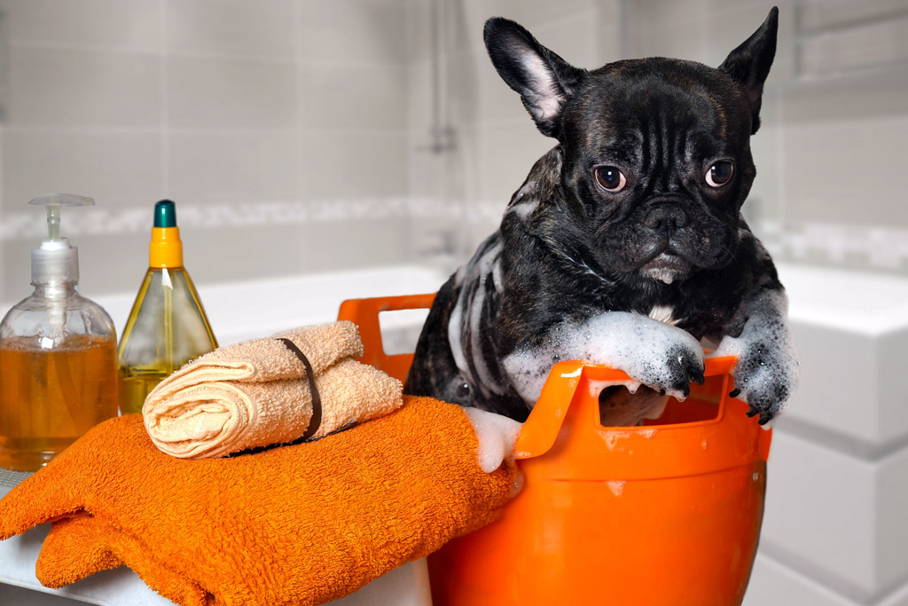 dog-bathing-tools