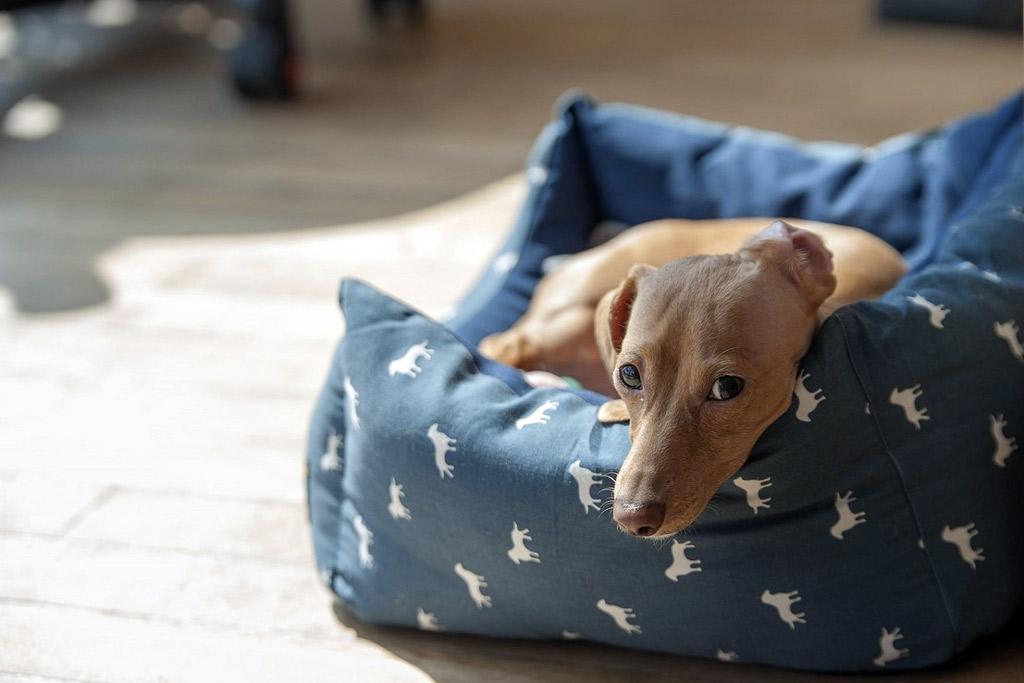 dog-bed-bolstered-sides