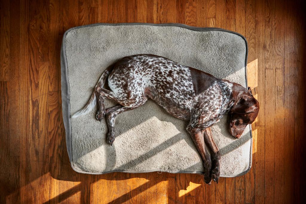 dog-bed-flat