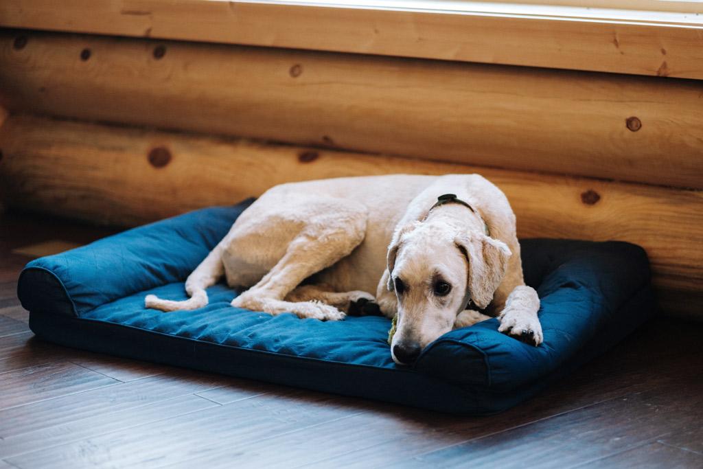 dog-bed-orthopaedic