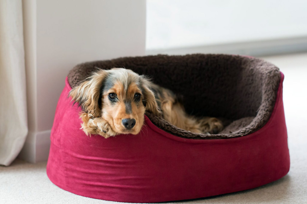 dog-bed-soft-round