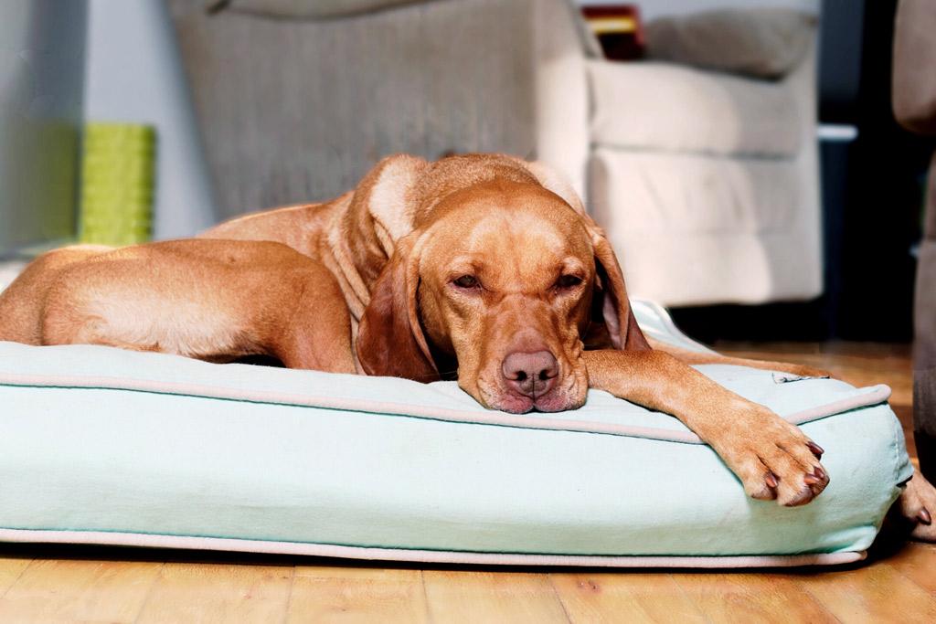 dog-bed-washable