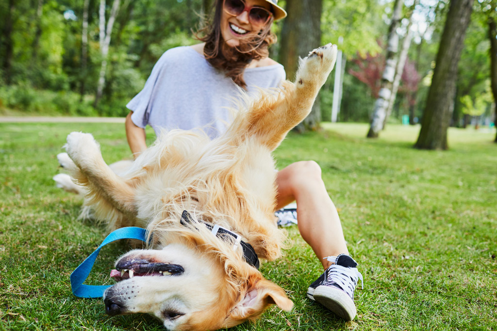 dog-before-exercise
