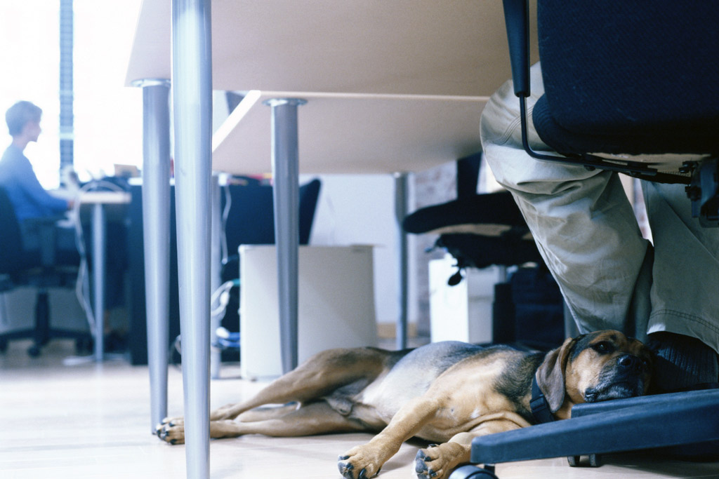 dog-benefits-at-work-2