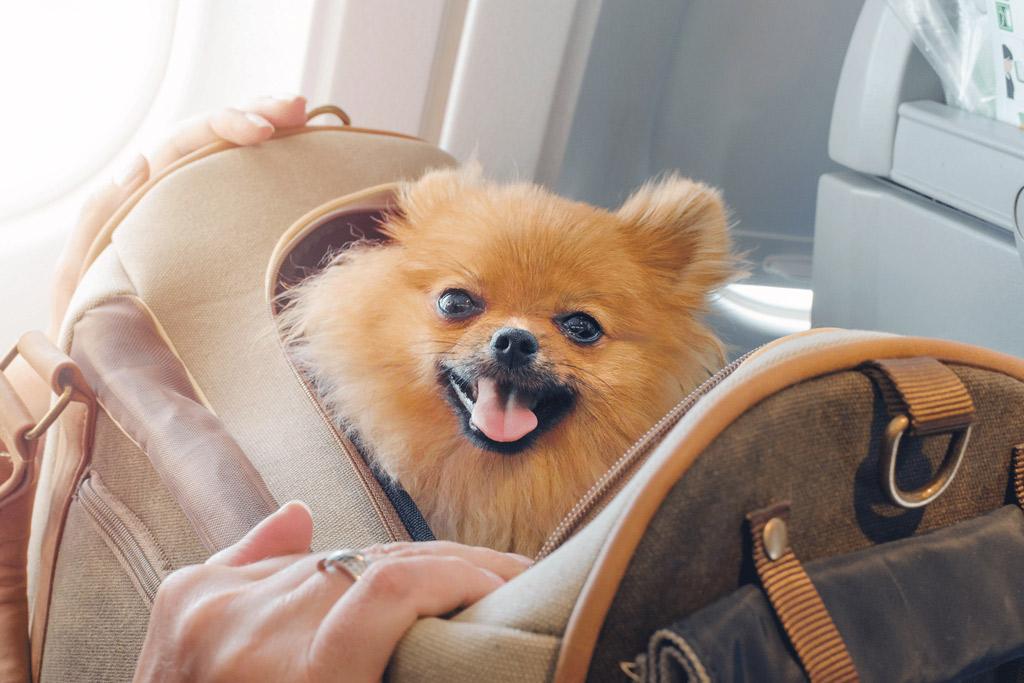 dog-boarding-trip