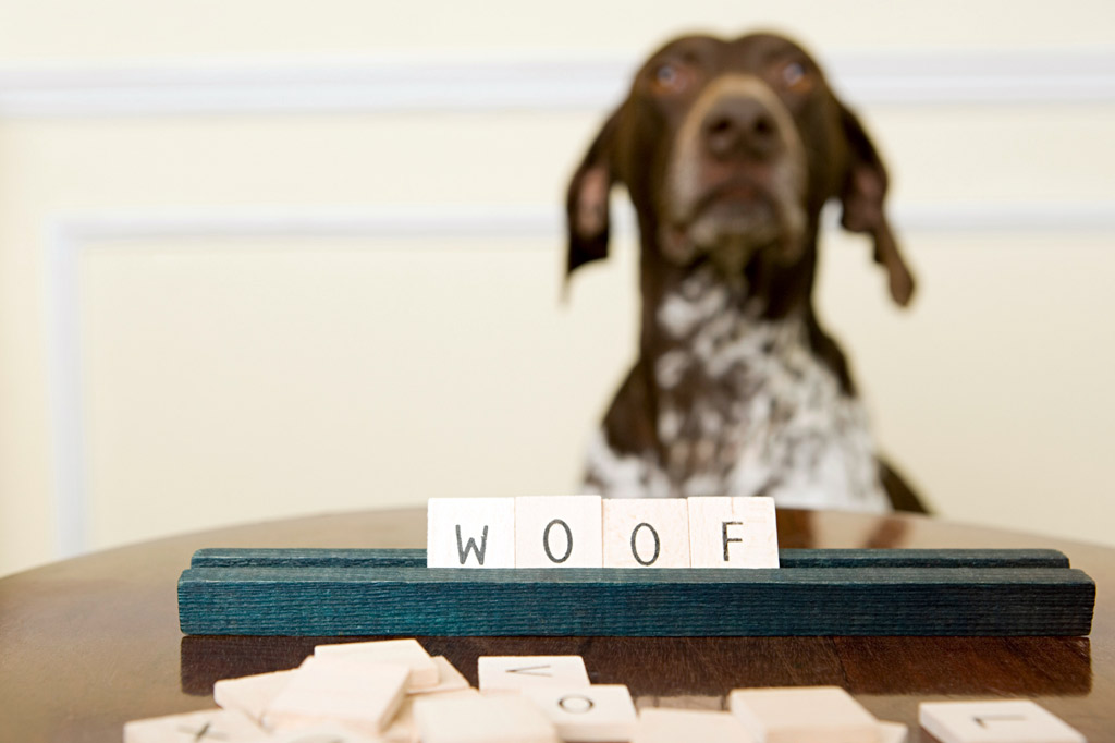 dog-brain-games