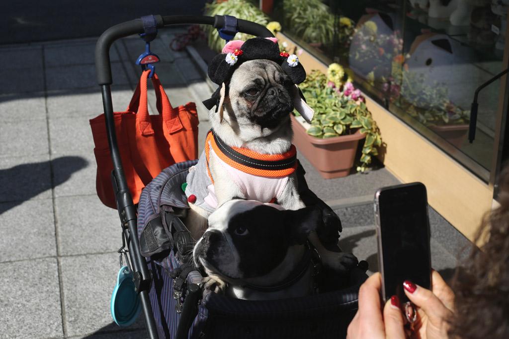 dog-buggy