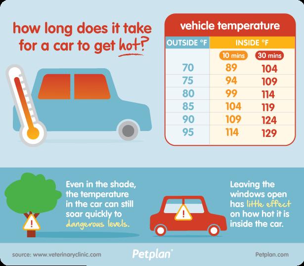 dog-car-dangers-hot-temperature