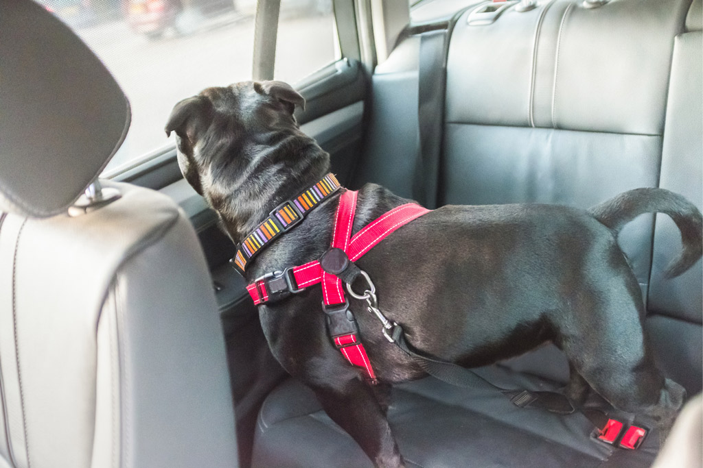 How to Travel With Your Dog by Car
