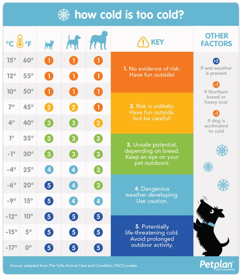 dog-care-cold-temperatura-chart