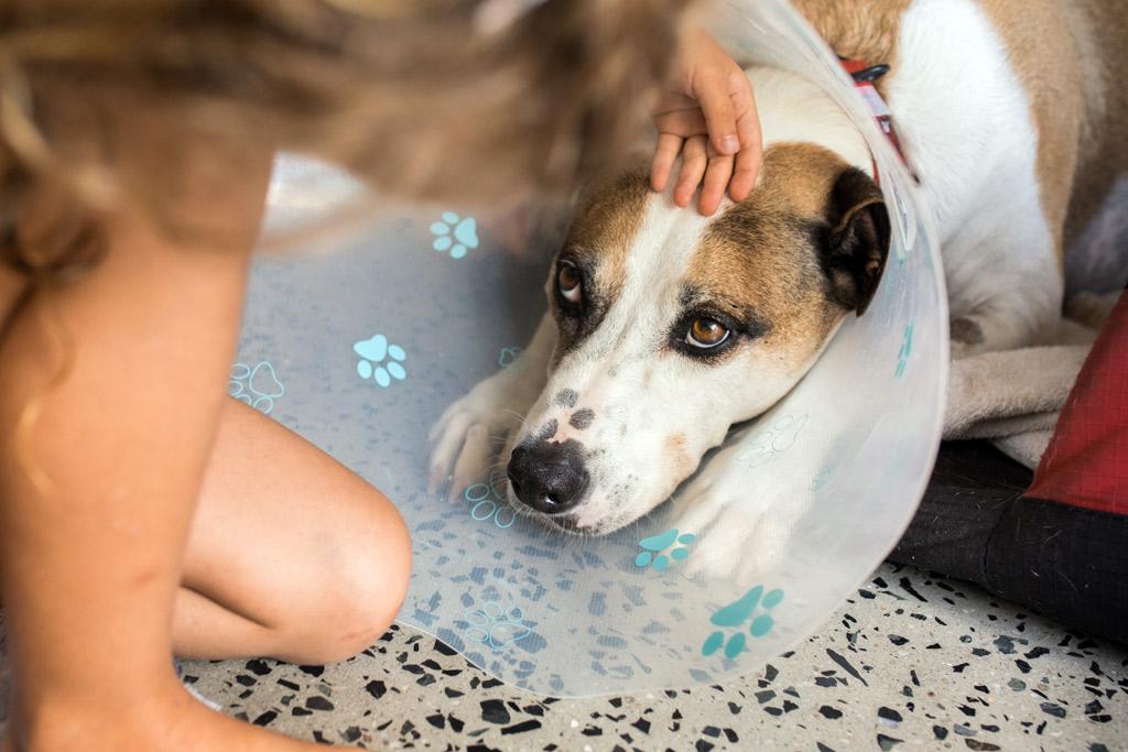 dog-care-when-sick
