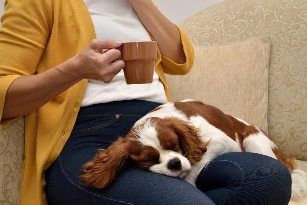 dog-cuddles-body-language