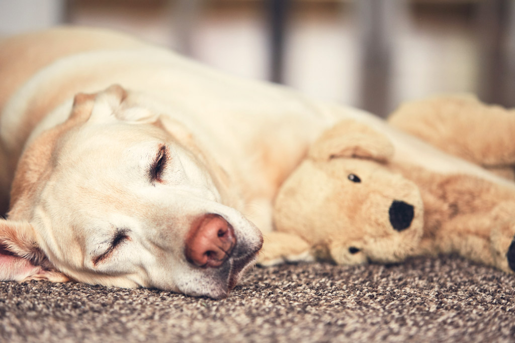 dog-entertained-plush-toy