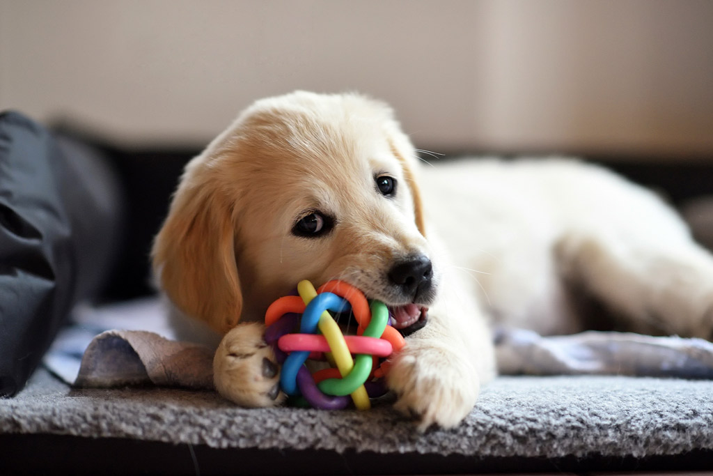 dog-entertained