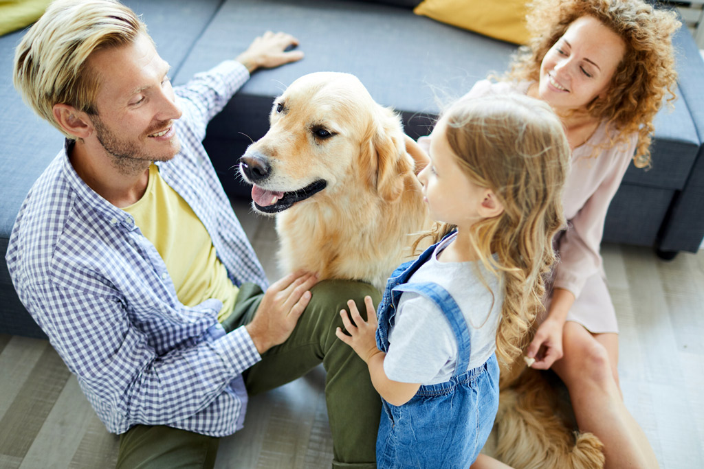 dog-environment-companionship