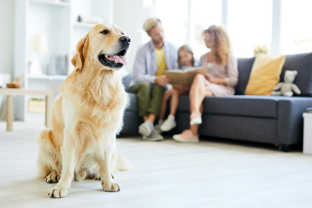 dog-environment-needs