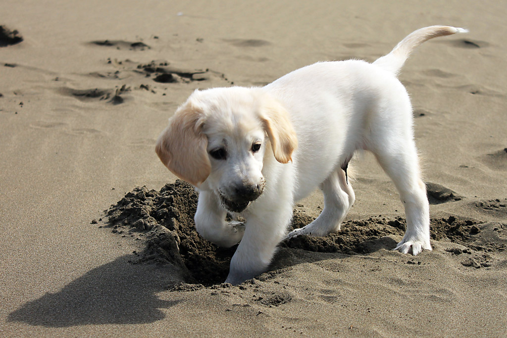 dog-exercise-digging