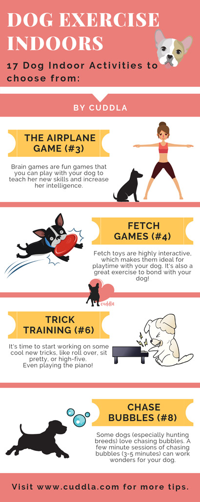 dog-exercise-indoors-list